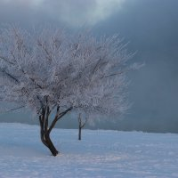 Танцующее дерево. :: Ирина Королева