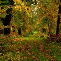 Старая тропа :: Сергей Карачин