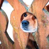 Пёс :: Сергей Смирнов