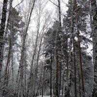 Красота зимнего леса :: Татьяна Котельникова