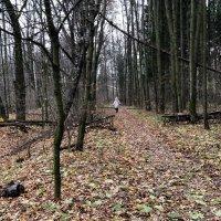 Осенняя аллея в парке :: Ekaterina Podolina