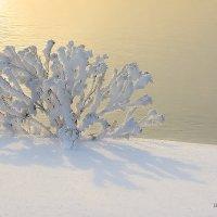 Снегами запорошенный.... :: Ричард Петров