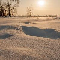 Морозным днём... :: Сергей Герасимов