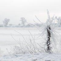 Дерево... :: Вадим *
