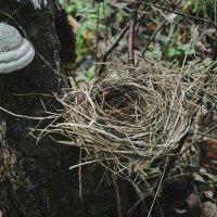 Гнездо :: Анна (Анка) Салтыкова