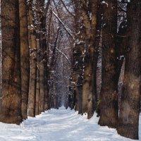 Зима :: григорий