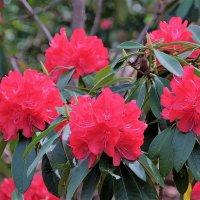 Ботанический сад Higashiyama Нагоя :: Swetlana V