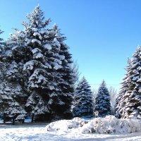 Ели в снегу...Пирамиды забвения... :: super-krokus.tur ( Наталья )