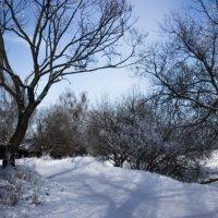 зима :: Niki_ Nik