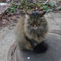 Монастырский кот в Звенигороде :: татьяна