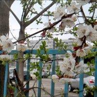 Минувшей весной... :: Нина Корешкова