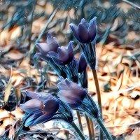 Первые цветы :: Наталья ***