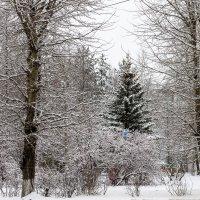 зима в городе :: Светлана Ку