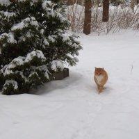Солнышко на снегу :: Регина Пупач