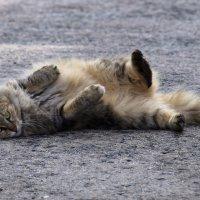 Кошечка :: Александр Деревяшкин