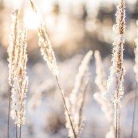 Зимнее поле :: Анастасия Жигалёва