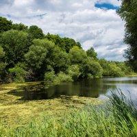 Есть в парке старый пруд... :: Владимир Безбородов