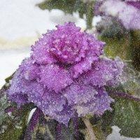 И зимой цветут цветы :: Наталия П