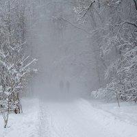 В лесу :: Михаил Рогожин