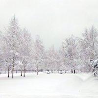 Зима :: Alex Sash