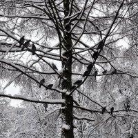 Братеевские голуби :: Анатолий Колосов