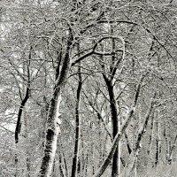 Зимний пейзаж :: Михаил Столяров