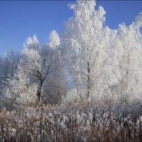 В снежном плену :: Елена Ерошевич