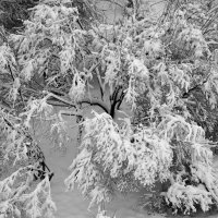 Зима :: Сергей Басов