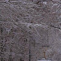 Зима в Москве :: Андрей