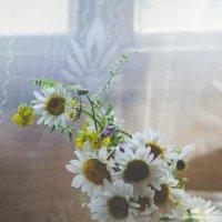 Ромашки-нежность, красота, вдохновение :: Наталья Батракова