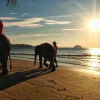 слоны на закате :: Dmitry i Mary S
