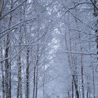 Последнее утро января :: Дмитрий Никитин