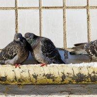 2 : 3 = Любовь на 3 не делится ! :: Анатолий. Chesnavik.