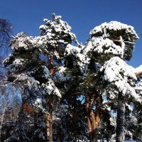 "Зима, снег и солнце... (типа ""мороз и солнце"") :: Alex Sash"