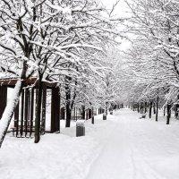Прощай январь...малые формы :: Анатолий Колосов