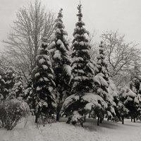 Зима. :: Наталья