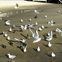 Морские птицы тоже любят хлеб ) :: Людмила