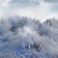 Морозец. :: Евгений Усатов