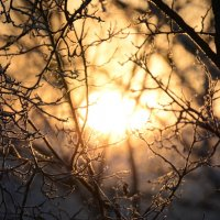 Мороз и солнце :: Анна Попова