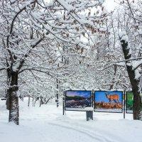 Зима и лето в одном кадре. :: Владимир Безбородов