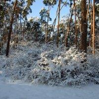 Зима – это время, когда ты ждешь лета, но в то же время безумно радуешься снегопаду:-) :: Ольга Русанова (olg-rusanowa2010)