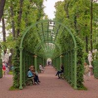 Летний сад :: bajguz igor