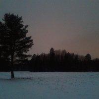 Зимний вечер :: Сапсан