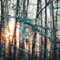 Рассвет в лесу :: Виктор
