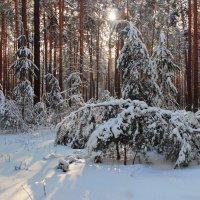 Февральской солнечной дремотой... :: Лесо-Вед (Баранов)