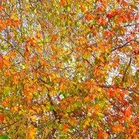 Осени наряд! :: Владимир Шошин