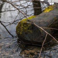 В лесу... :: Ольга Милованова