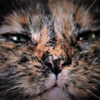 Кошачий носик :: Avada Kedavra!
