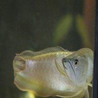 Подводный мир :: Faina Popova