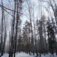 Зимний парк :: Татьяна Котельникова